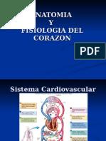 Anatomia y fisiologia del corazon