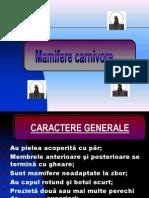 MAMIFERE CARNIVORE-PISICA .ppt