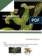 Fam. Junglandaceae