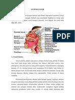 Anatomi Tonsil
