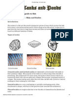 Fish Physiology - Skin and Scales