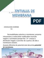 Potential de Membrana