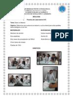 Practica de Biologia 5