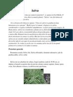 Salvia-planta miraculoasa