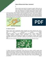Bakteri Heterotrof Dan Autotrof