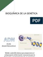 Bioquímica de La Genética