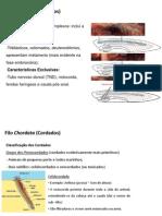 Aula de Peixes e revisão de protocordados.ppt