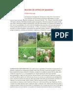 Sistema de producción de ovinos en pastoreo.docx