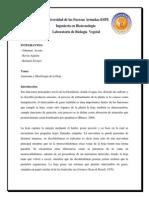Anatomía y Morfología de La Hoja