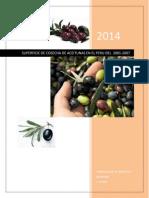 Cosecha de Aceitunas en El Peru