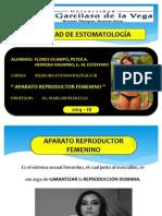 Aparato Reproductor Femenino ( Expo )