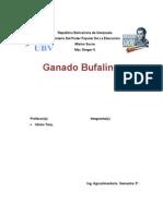 bufalo.doc