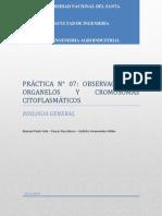 Observacion de Organelos y Cromosomas Citoplasmaticos