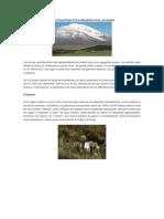 Que Ecosistema Esta Presente en El Ecuador