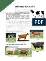 Clasificarea bovinelor referat