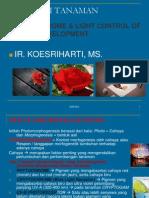 MATERI 9-PHYTOCHROME-LIGHT CONTROL.pdf