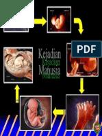 Proses Kelahiran Manusia