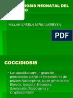 Coccidiosis Neonatal Del Porcino Por Mireyya