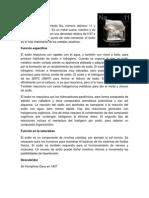 LOS ELEMENTOS.docx