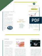 triptico embrio