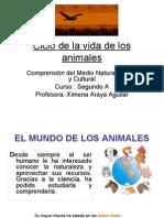 Ciclo de La Vida de Los Animales