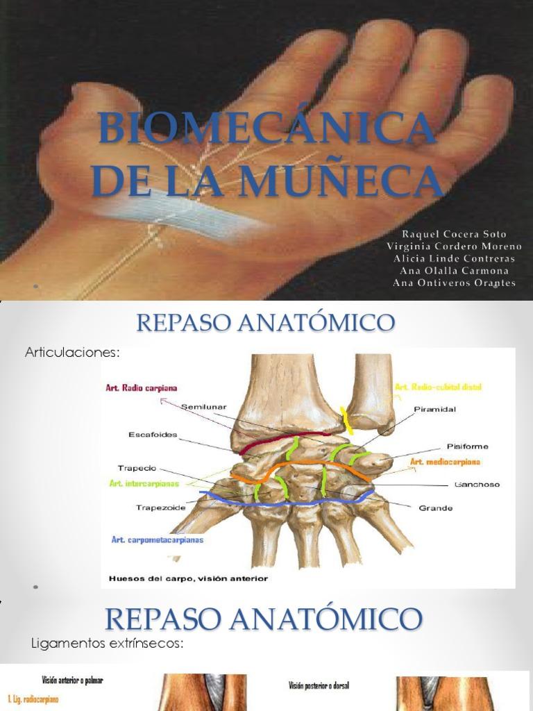 Biomecánica de La Muñeca
