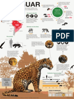 Infografía El Jaguar- Bruno Bartolo