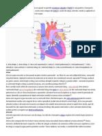 Cardiovascularul