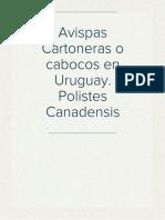 Avispas Cartoneras o cabocos en Uruguay. Polistes Canadensis