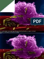 Endositosis, Endosoma y Lisosomas30-Ago