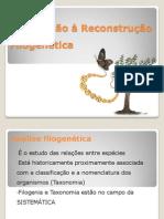 Aula Filogenia - Biologia