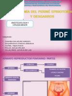 Anatomia Del Perine