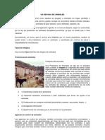 ALBERGUE DE ANIMALES.docx