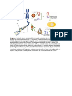 Un genes el conjunto de una secuencia determinada de nucleótidos de uno de los lados de la escalera del cromosoma referenciado.docx