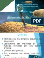 Bacteriofagos 1701.pptx