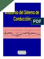 Anatomia_del_Sistema_de_Conduccion.pdf