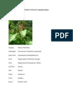 89505479-POHON-CENDANA.doc