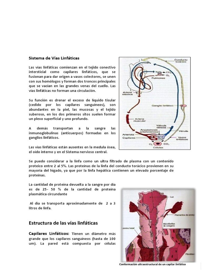 Sistema de Vías Linfáticas BORRADOR