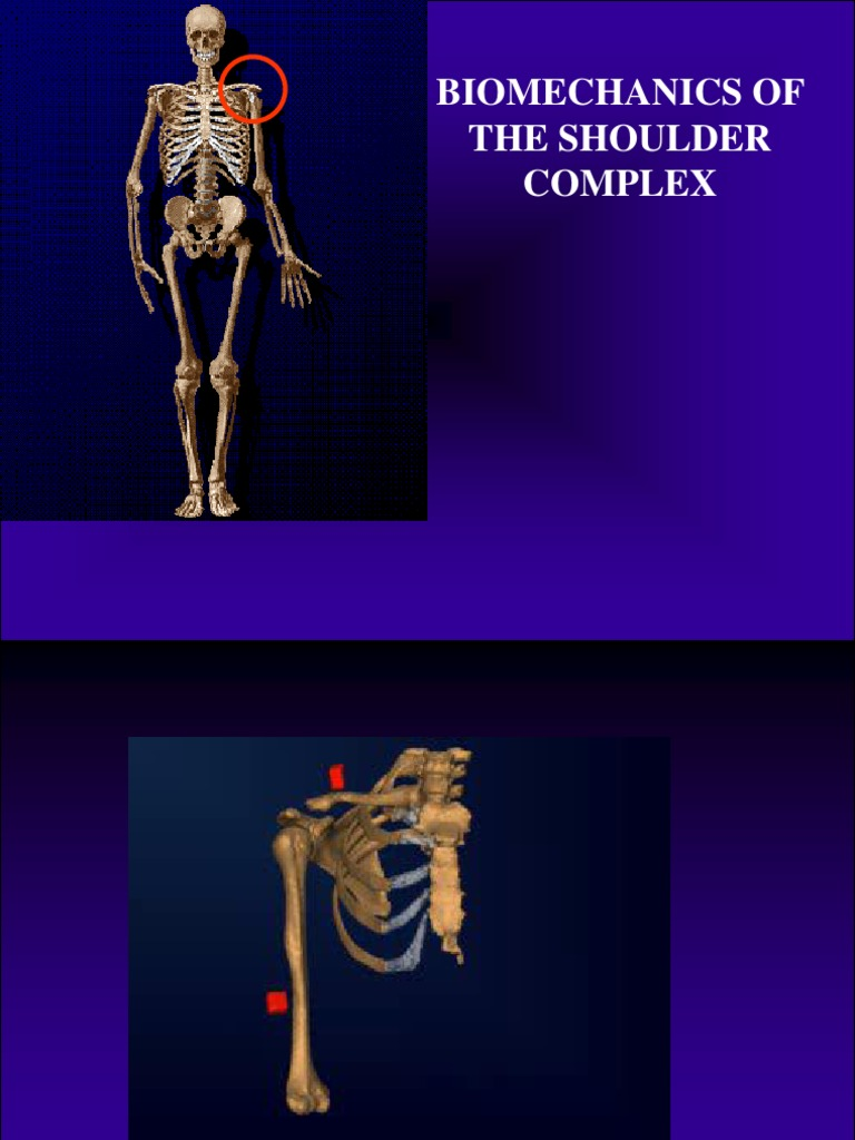 Biomechanics of the Shoulder Complex | Shoulder | Anatomical Terms ...