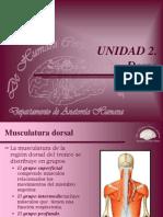 musculos columna