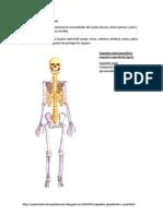 Esqueleto Apendicular y Axial