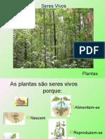 seres vivos plantas