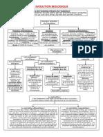 EVOLUTION BIOLOGIQUE.pdf