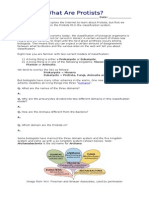 Fixed Protista Worksheet
