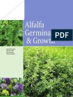 Alfalfa Growth