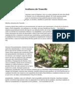 7 Islas Canarias Hierbas podr?an Ser Cultivadas Como de Cultivos De los Agricultores de Tenerife