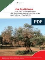 Xylella fastidiosa olivo