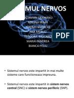 Sistem nervos pptx