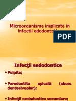 Inf Endodontice