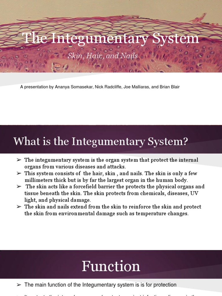 Integumentary System Skin Integumentary System